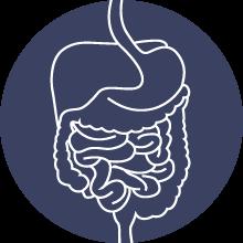 outline-of-digestive-system